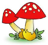 Nischad blogg inom svampar